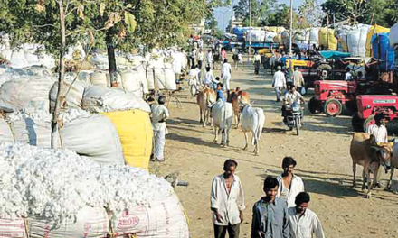 Cotton price remain firm amid short supply