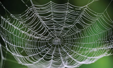 Researchers develop method for making artificial spider silk