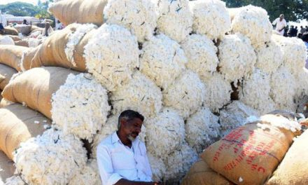 Govt. to enter the market if cotton price touch/ falls below MSP