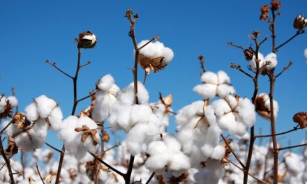 India expected to remain largest cotton producer in 2017-18