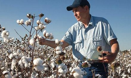 Cotton USA takes US spinners to Egyptian textile firms