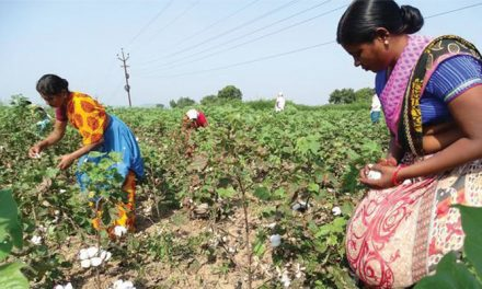 Telangana online payments to cotton farmers has made a mark