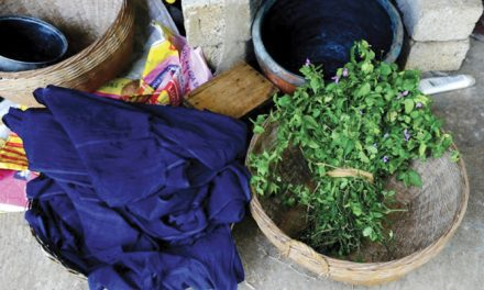 Bacteria getting used to make Sustainable Indigo Dyes