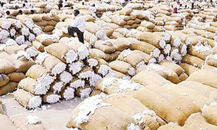 Cotton market to face difficulties due to uncertain trade policies