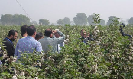 Pakistani CCRI's new Bt cotton gets commercial licence