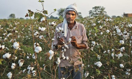 Country needs to improve cotton yield to remain net exporter