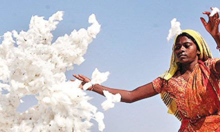 Indian cotton sector losing with tariff issues