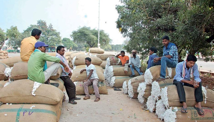 Increasing price of cotton price to hit margins textile cost