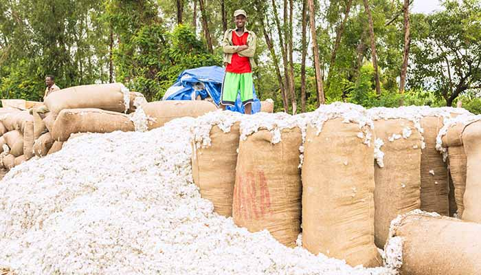 Ethiopia aims at promoting sustainable value chain for cotton
