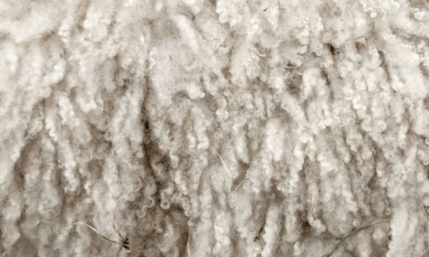 Trade of raw wool soars with high CAGR