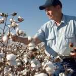 Indonesian textile mills are set to purchase an additional US Cotton